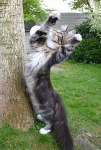 Hallelujah kitty!